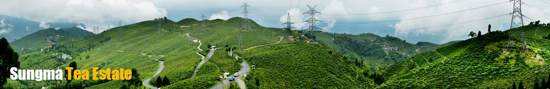 Sungma Tea Estate | JayShreeTea